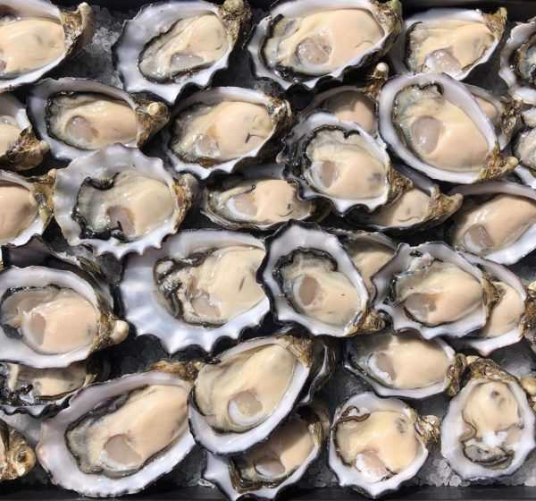 Fresh Shucked Oyster from Coffin Bay